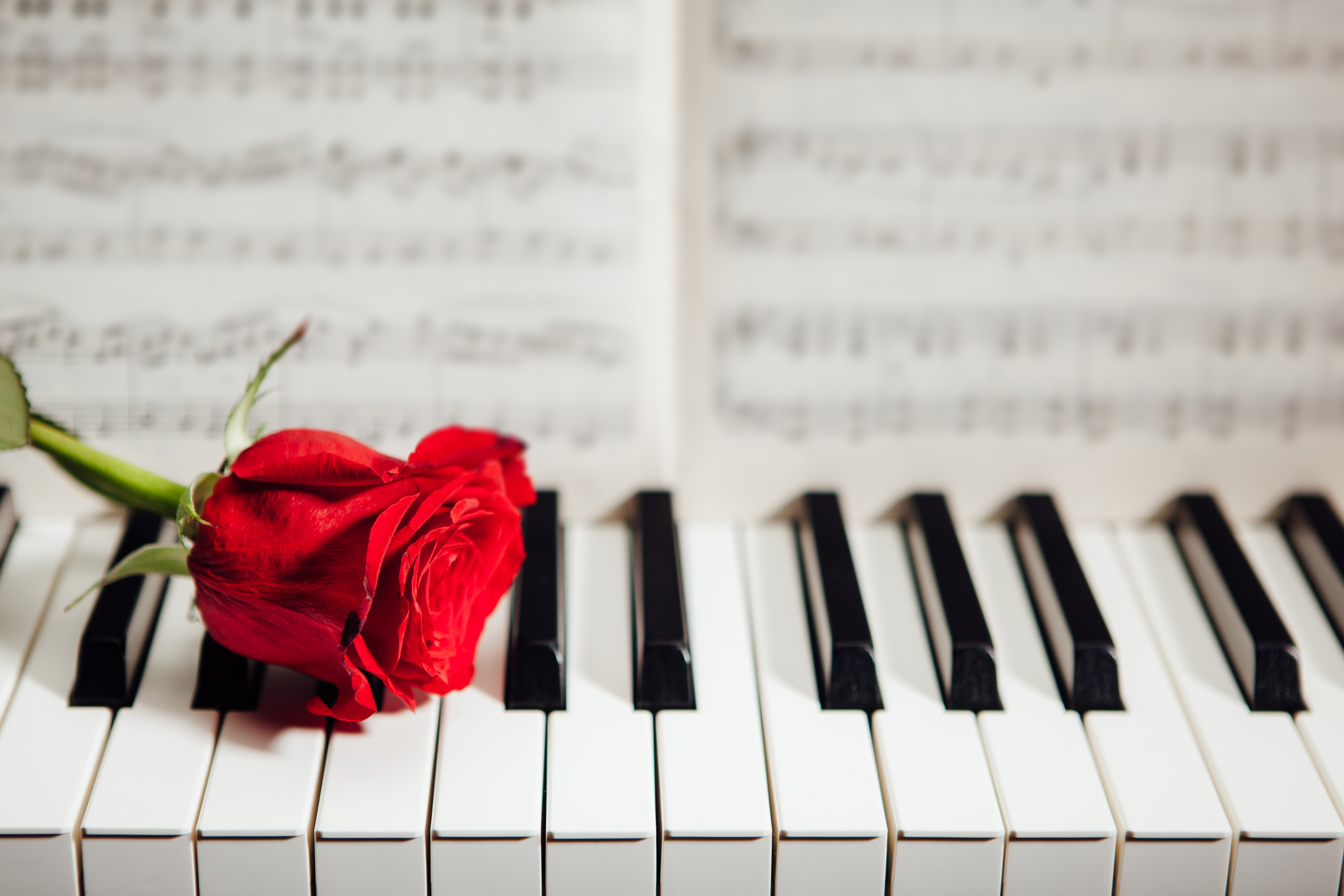 piano bara